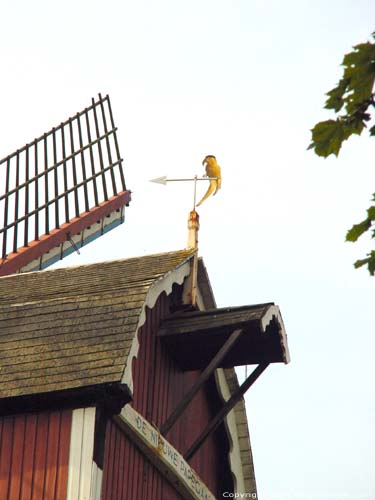 The New Parrot (High Signal Mill) BRUGES picture