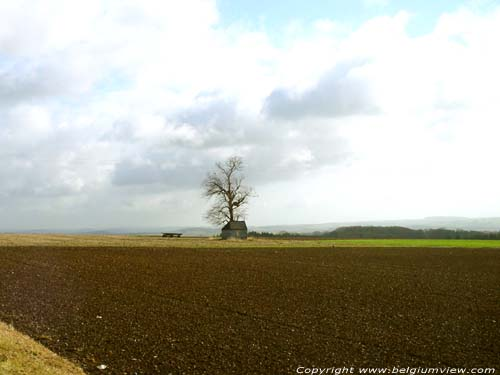 Landscape with lonesome tree ONHAYE picture