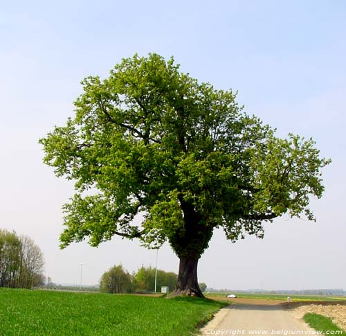 Gallows Tree (in Boirs) BASSENGE picture