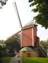 The New Parrot (High Signal Mill) BRUGES picture: